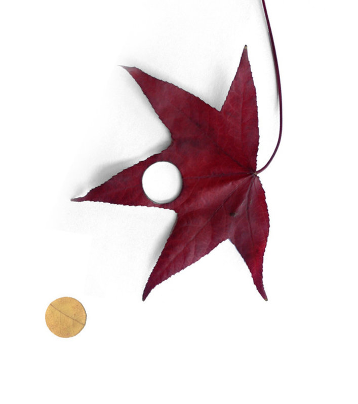 Autumn leaves | Research | Antoni Arola Studio